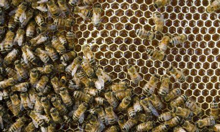 ambiente api salvaguardia