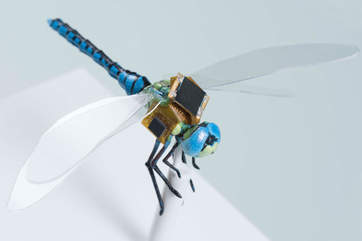 DragonflEye droni