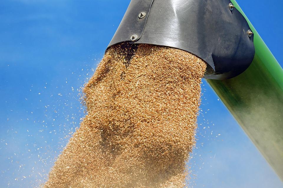 assicurazione sul grano