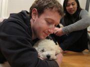 I cuccioli della Silicon Valley aiutano a lavorare in maniera più efficiente