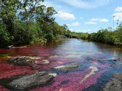 Cano cristales, il fiume più bello del mondo