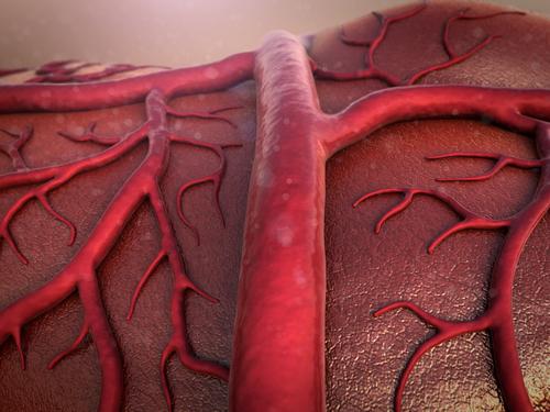 vasi sanguigni 3d la nuova frontiera