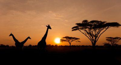 tesori-dell-africa-macron