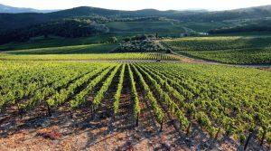 agrilevante 2017 agricoltura innovativa