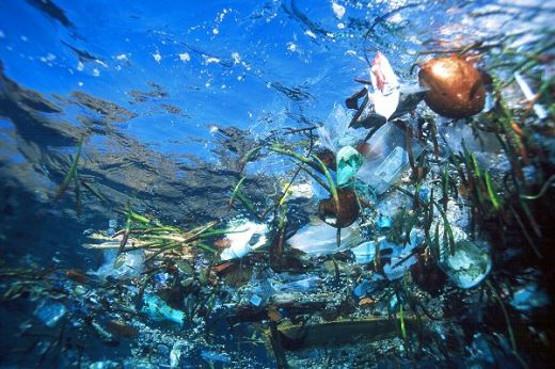 Inquinamento da plastica negli alimenti che provengono dal mare