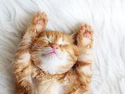 gatto ricco guinnes world record