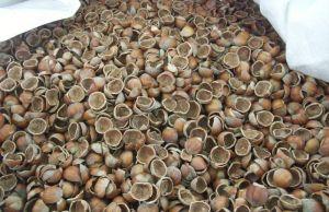 trasformare gli scarti in risorse gusci di nocciola