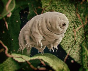 tardigrado-animale-immortale-2