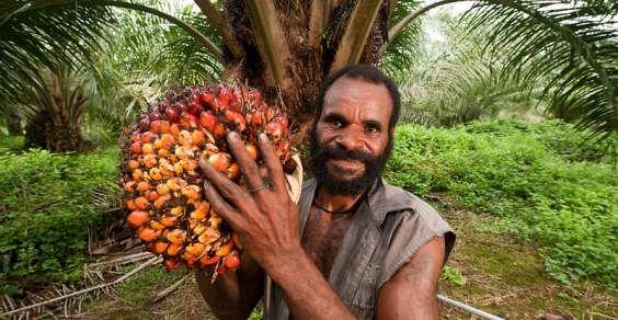 olio-di-palma