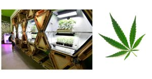 Industria-cannabis-brand-espansione-marketing