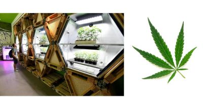 Industria-cannabis-in-crescita-potenzialita