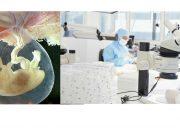 cellule-staminali-placentari
