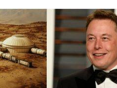 Musk-marte