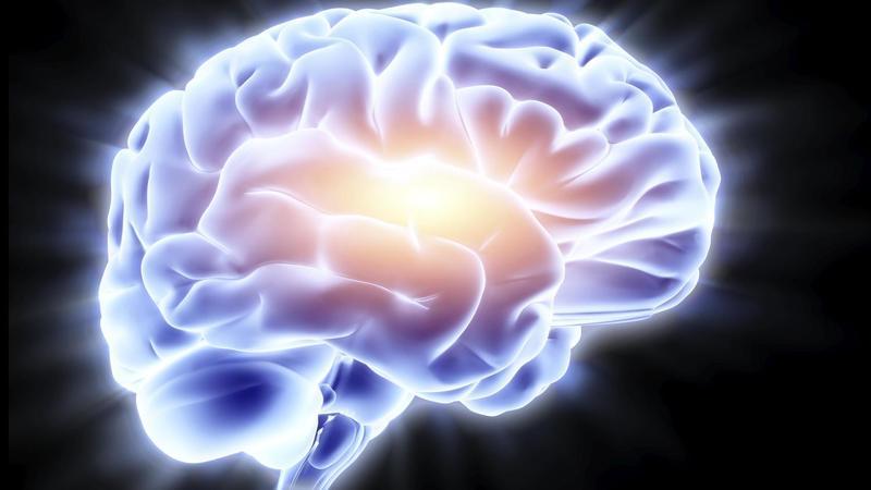 cervello-neuroscienze