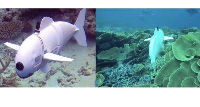 pesce-robot-MIT