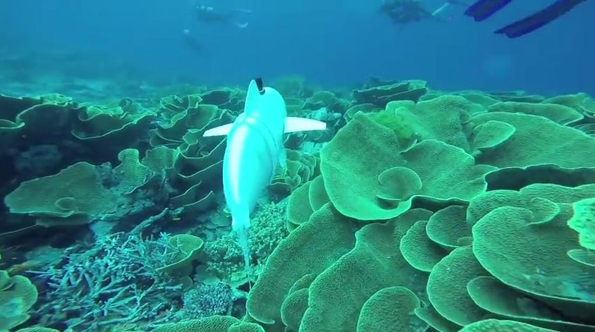 pesce-robot