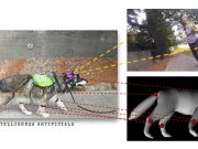 Intelligenza-artificiale-progetto-cani