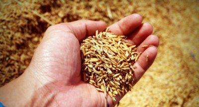 Aprire un'azienda agricola nel 2018: gli incentivi per i giovani