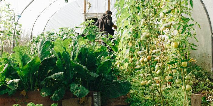 incentivi per giovani aspiranti imprenditori agricoli