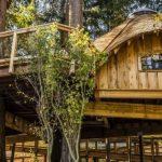 microsoft-case-sugli-alberi